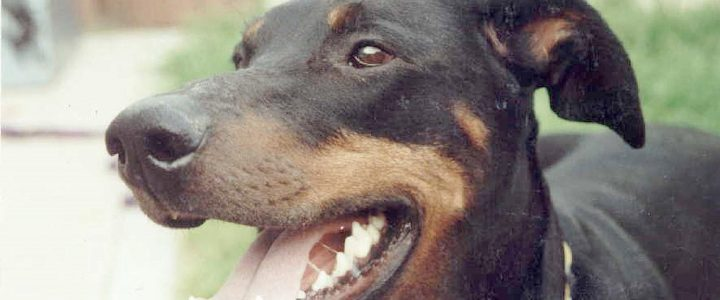 Hundeattacken: Es kann immer etwas passieren!