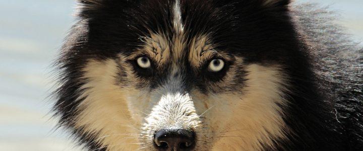 Hunde müssen Hund sein dürfen