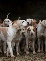 Hundeerziehung ohne Stress für Mensch und Tier (Teil II)